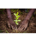 1 tree planted with Reforest'Action